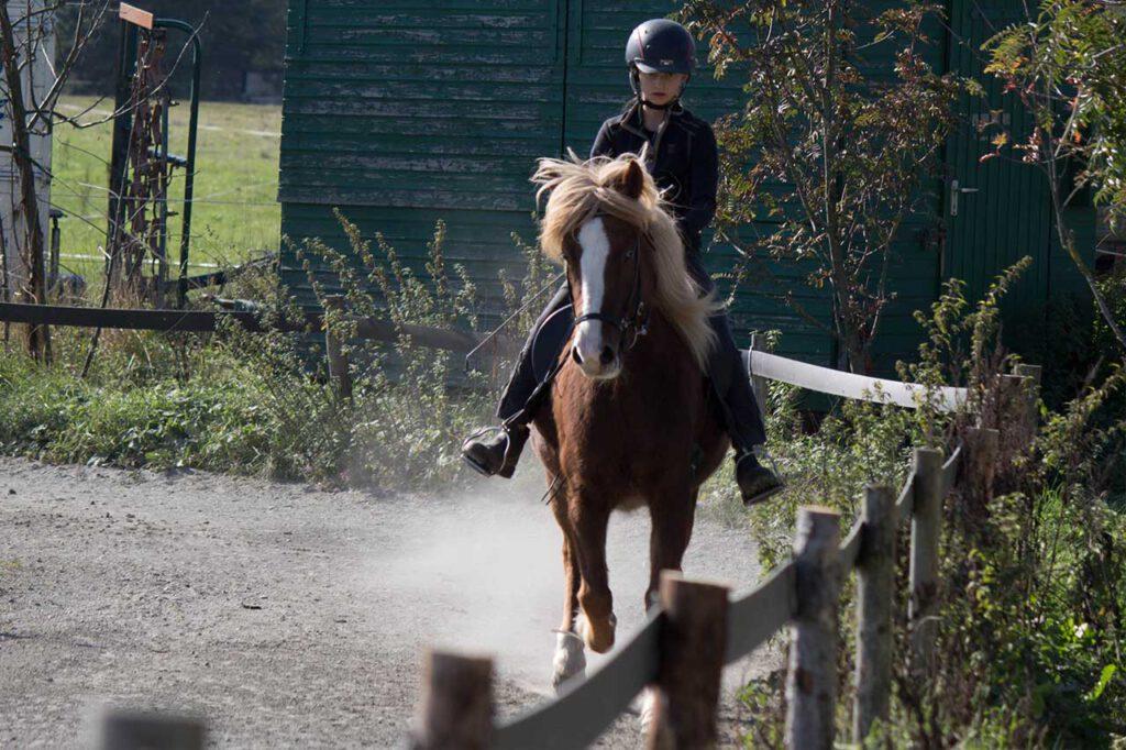 Reitausbildung & Lehrgänge mit Pferden |Akazienhof Schmitten