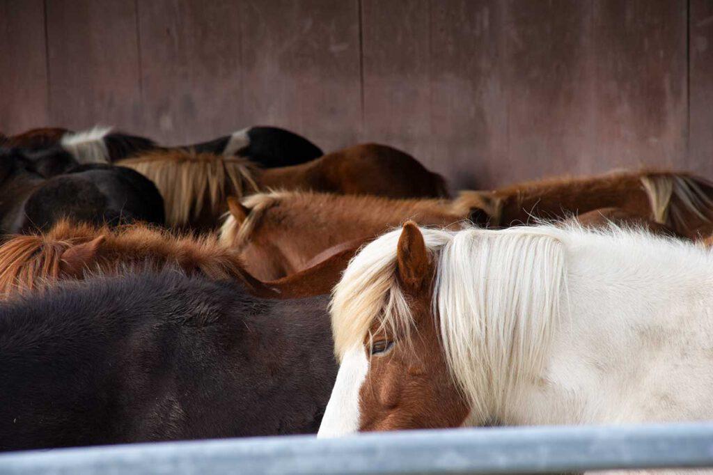Pferdepension | Pferdegestüt | Akazienhof Schmitten
